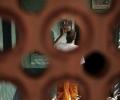 Steven Young Divya & Kalpesh - gallery 4