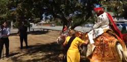 পাঞ্জাবি বর ঘোড়া থেকে মারিজুয়ানা ছুড়েছিল