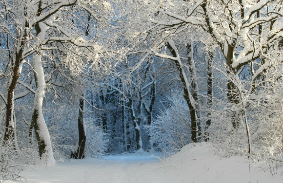5 Poems About Winter