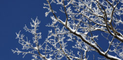 5 Beautiful Poems About Winter