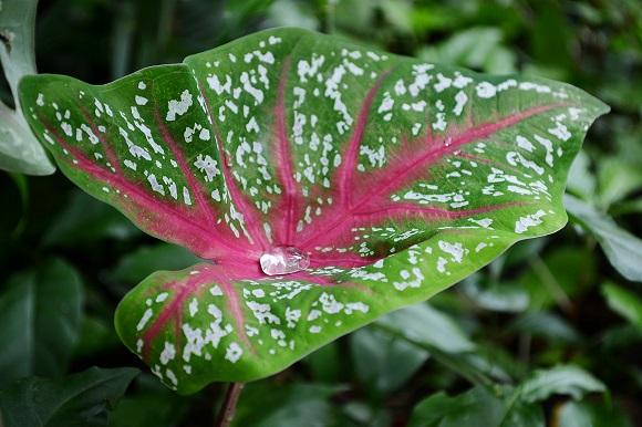 rain-drop-183160_1920