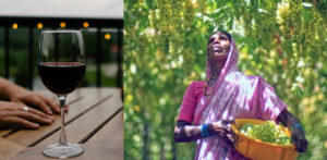 How Indian Wine is becoming Popular