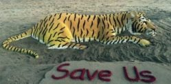 Sudarsan Pattnaik creates Sand Art for World Tiger Day