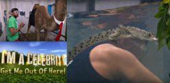 आमिर ख़ान Crocs, ऊंटों, और सांपों में I से एक सेलिब्रिटी वीक 1 से लड़ता है