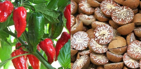 10 Most Dangerous Foods in the World f