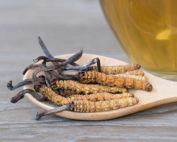 Natural Remedies for Energy and Vitality - cordyceps