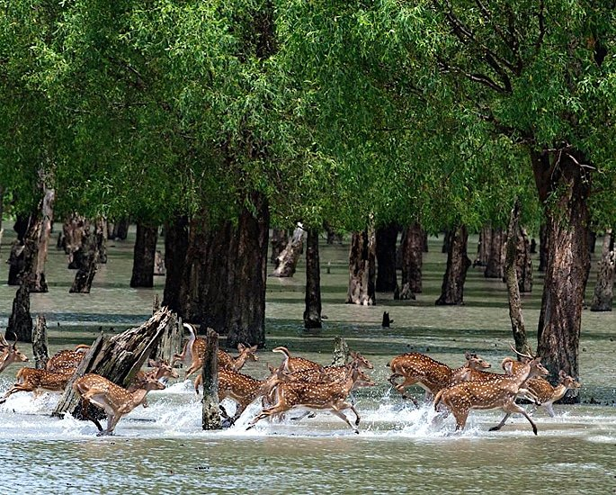 10 Top Historical Heritage Sites of Bangladesh - The The Sundarbans