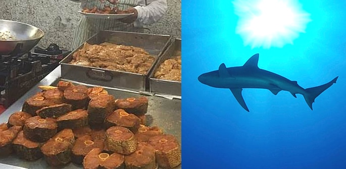 Shark Meat secretly Sold as 'Fish' Dishes in Karachi f