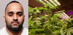 Man grew £25k Cannabis in Home where Wife refused to Live
