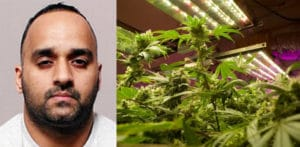 Husband grew £34k Cannabis in Home where Wife refused to Live f