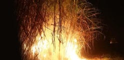 Indian Girl dumped in Sugarcane Fire for Not Marrying Lover