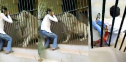 Lion severely attacks Karachi Zookeeper in Pakistan