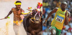 Indian Buffalo Racer runs Faster than Usain Bolt?