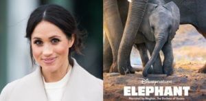 Disney Film narrated by Meghan Markle to Stream in April f