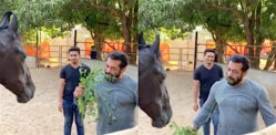 Salman Khan treats Himself to Horse Food amid Lockdown