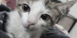 Pakistani Boy & Friends gang-rape Kitten to Death