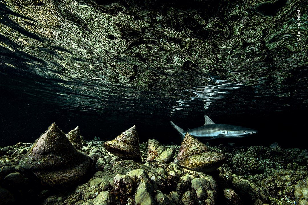 Wildlife Photographer of the Year Competition 2020 - Laurent Ballesta