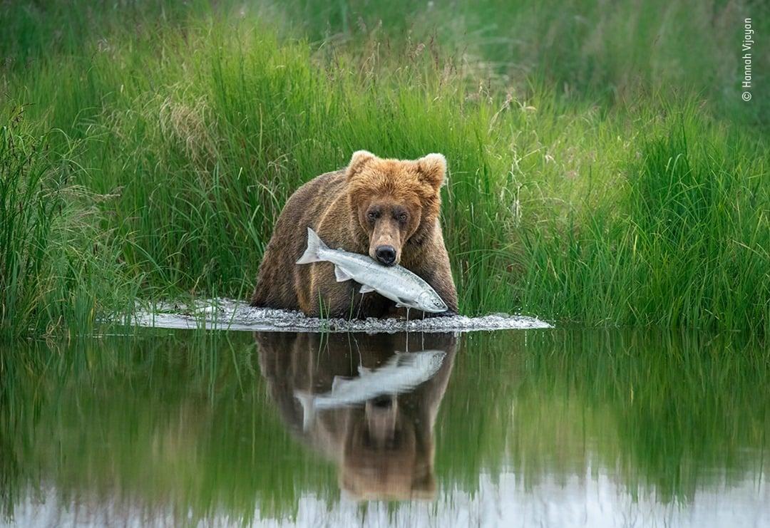 Wildlife Photographer of the Year Competition 2020 - Hannah Vijayan
