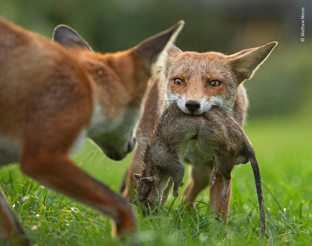 Wildlife Photographer of the Year Competition 2020 - Matthew Maran