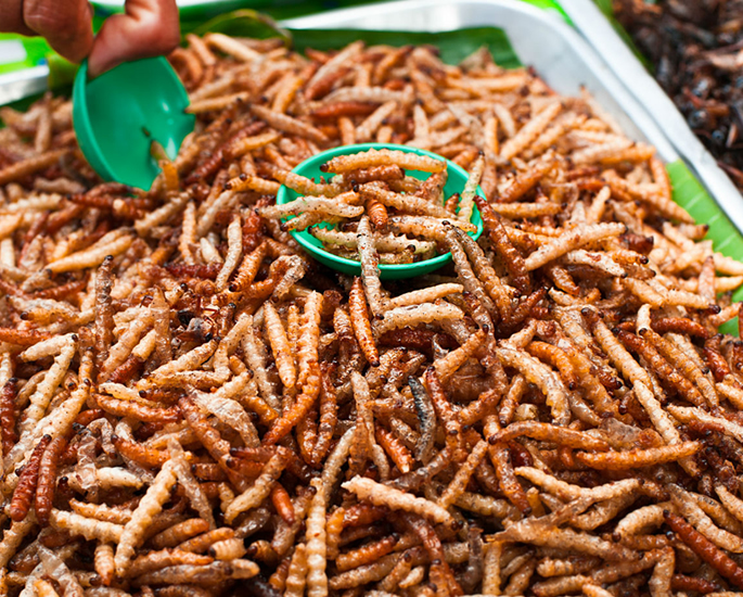 Edible Insects which You Can Buy and Eat - legal