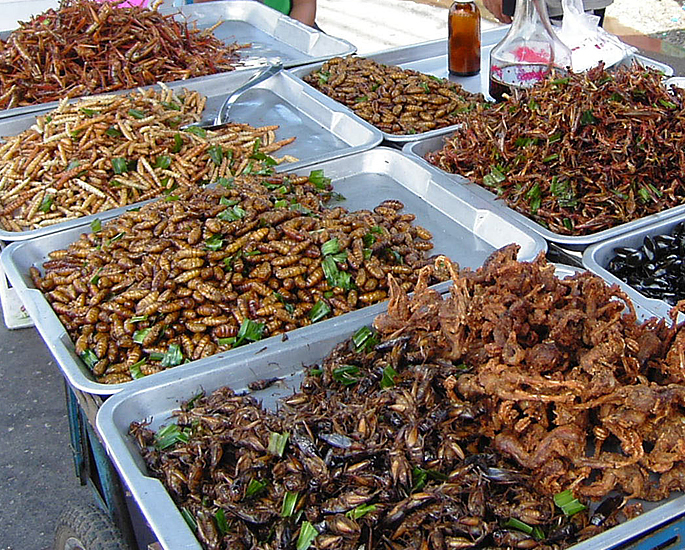 dible Insects which You Can Buy and Eat - safety