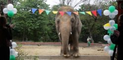 World's Loneliest Elephant Leaves Pakistan after 35 Years