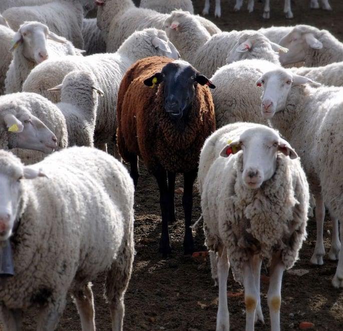 એક સ્કોટ્ટીશ દક્ષિણ એશિયન - કાળા ઘેટાં તરીકે વિકસતા દસ અનુભવો