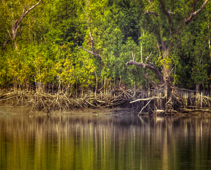 6 of India's most Unusual Places to Visit - Sundarbans Delta