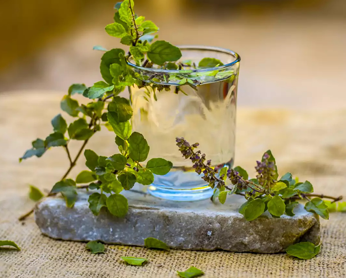 Herbal Water 6 Ayurvedic Water Ideas to Try - tulsi