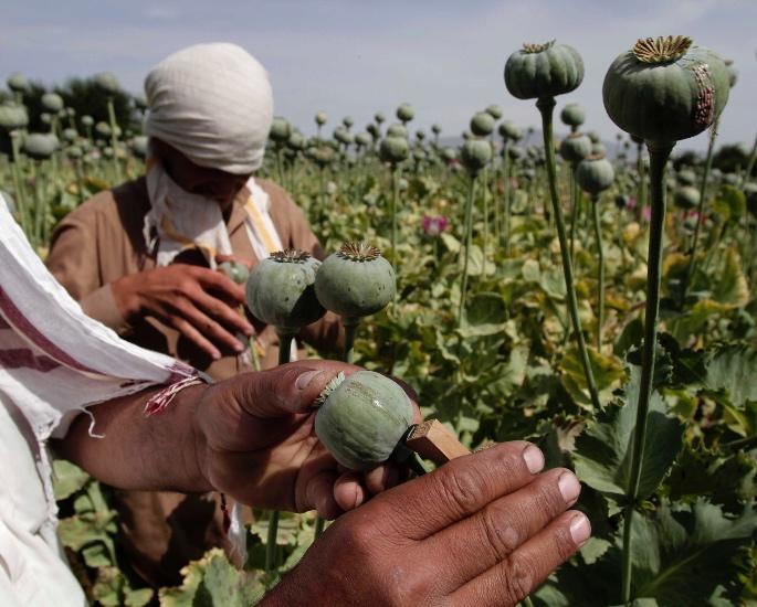 5 बड़े पैमाने पर ड्रग्स बस्ट भारत में हुआ - अफीम बस्ट 2020