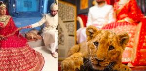 Pakistani couple slammed for using Lion Cub as Wedding photo Prop f