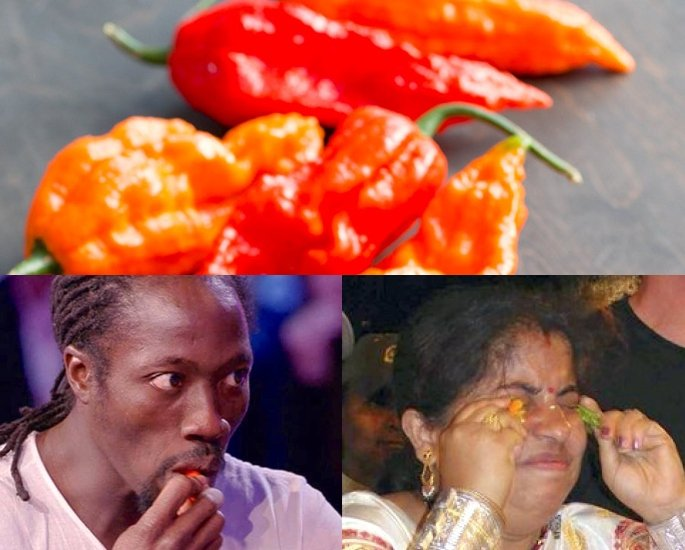 Which is the Hottest Chilli Pepper Found in India – Records