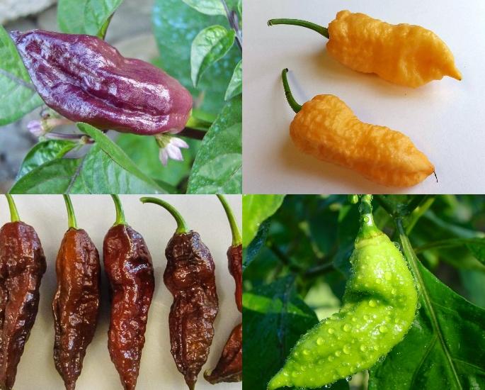 Qual è il peperoncino più piccante trovato in India_ - Varietà
